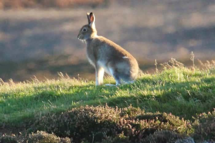 Hare sitting on the ground